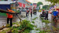Berita Banten, Berita Banten Terbaru, Berita Banten Hari Ini, Berita Serang, Berita Serang Terbaru, Berita Serang Hari Ini: Hujan Deras dan Angin Kencang Tumbangkan Pohon di Kota Serang